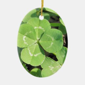 4 Leaf Clover Good Luck Charm Photo Ceramic Oval Ornament