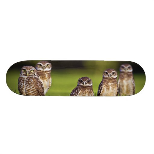 5 Burrowing Owls Athene Cunicularia Skate Decks