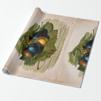 5 vintage plums painting