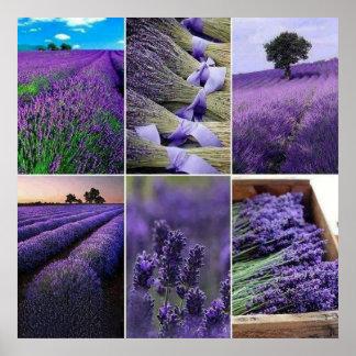 60.96x60.96cm, Lavender poster (chechmate)