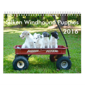 6 2016 Silken Windhound Puppies Calendar