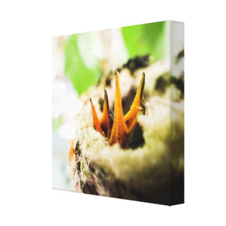 6 Day Old Rufous Hummingbird Babies Canvas Print