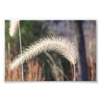 """6"""" x 4""""  photograph of swamp grass"""