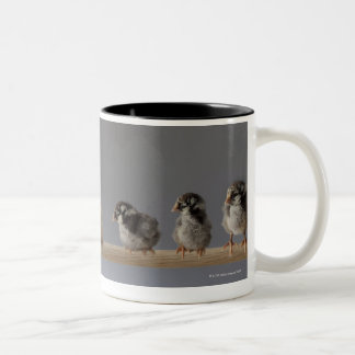 7 Baby Pet Chickens on a Perch Two-Tone Coffee Mug