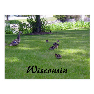 7 Little Ducks Postcard