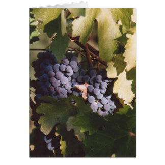 85. Sunlit Grapes, Sonoma County, CA Card