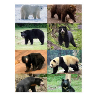 8 Bears of the World Postcard