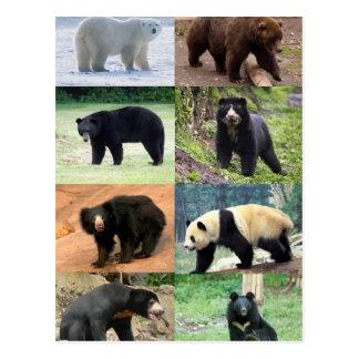 8 Bears of the World Postcard