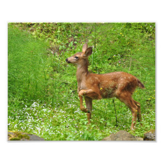 8X10 Little King/Queen of Fawns Photo Print