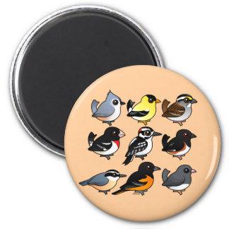 9 Northeast USA Backyard Birds Magnet