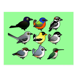 9 Southeast USA Backyard Birds Postcard