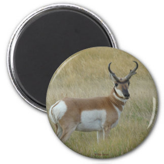 A0001 Pronghorn Antelope 2 Inch Round Magnet