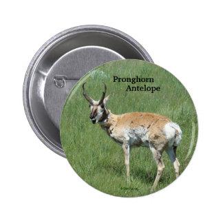 A0003 Pronghorn Antelope button