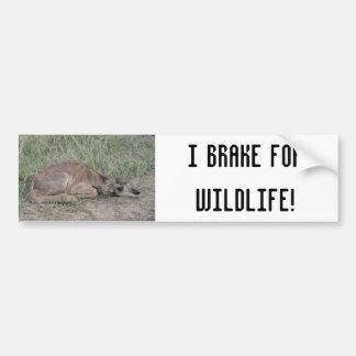 A0006 Baby Pronghorn Antelope Bumper Sticker