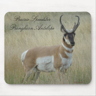 A0008 Pronghorn Antelope Mouse Pad