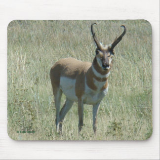 A0013 Pronghorn Antelope Buck Mouse Pad