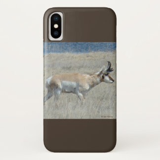 A0025 Pronghorn Antelope Iphone 8/7 phone case. iPhone X Case