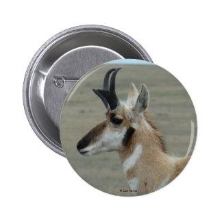 A0029 Pronghorn Antelope button
