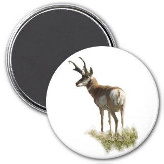 A0043 Pronghorn Antelope Buck Magnet