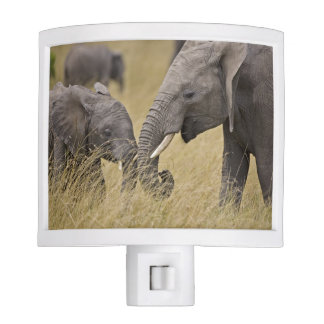 A African Elephant grazing in the fields of the Night Lights