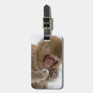 A baby Japanese Macaque (or snow monkey) Luggage Tag