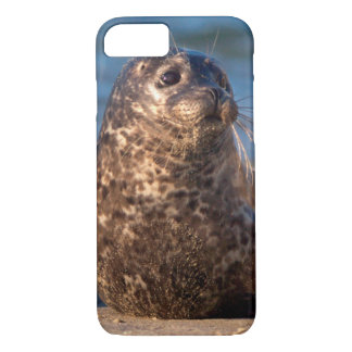 A baby seal coming ashore in Children's Pool iPhone 7 Case