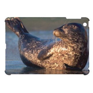 A baby seal lifting it's tail case for the iPad mini