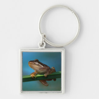 A Baby Tree Frog Silver-Colored Square Keychain