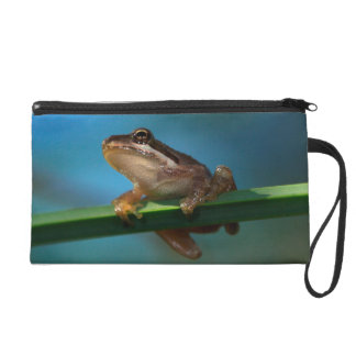 A Baby Tree Frog Wristlet Clutch