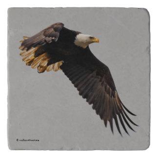 A Bald Eagle Takes to the Sky Trivet