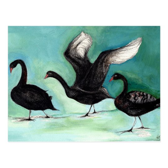 A ballet of Black Swans 2013 Postcard