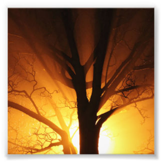 A Bare Tree At Sunset Photo Print