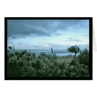 A Beach Pine Evening Card