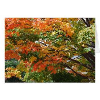 A beautiful Autumn day in Salem, MA Card