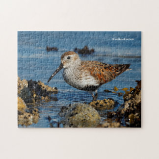 A Beautiful Dunlin Goes Solo Jigsaw Puzzle