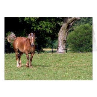 A Beautiful Horse Card