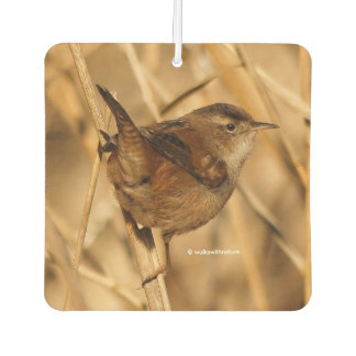 A Beautiful Marsh Wren in--Where Else?--the Marsh Car Air Freshener