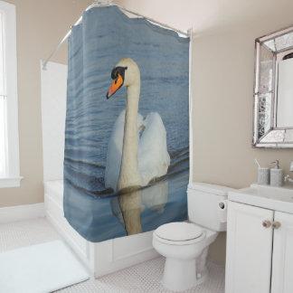 A Beautiful Mute Swan Approaches