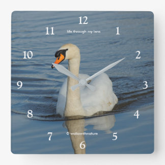 A Beautiful Mute Swan Approaches Wall Clock