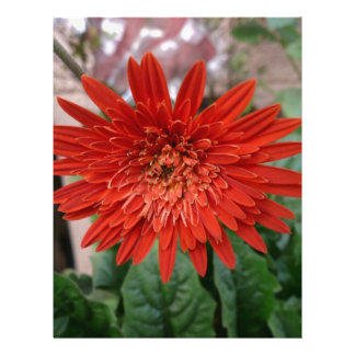 A beautiful red flower customized letterhead