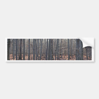 A beech forest in fall. bumper sticker