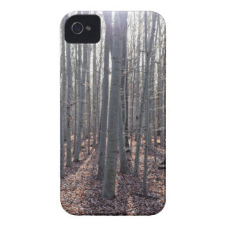 A beech forest in fall. Case-Mate iPhone 4 cases