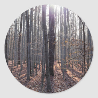 A beech forest in fall. classic round sticker