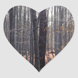 A beech forest in fall. heart sticker