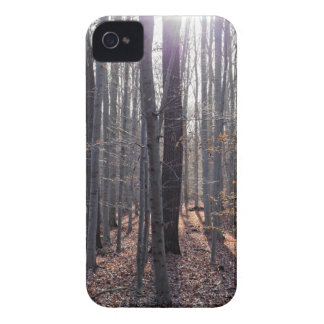 A beech forest in fall. iPhone 4 Case-Mate case