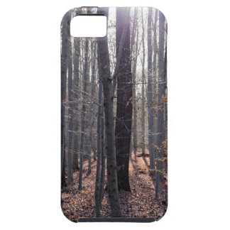 A beech forest in fall. iPhone 5 cover