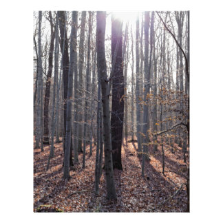 A beech forest in fall. letterhead