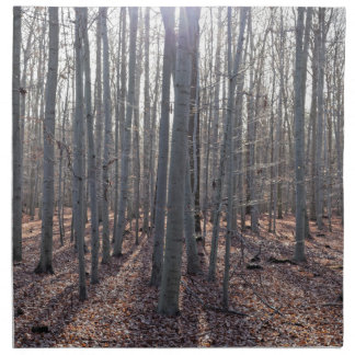 A beech forest in fall. napkin