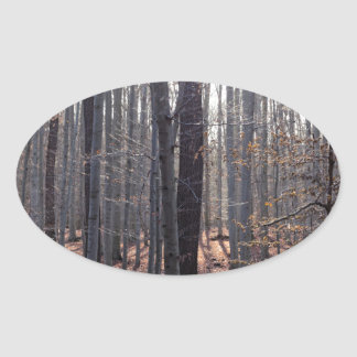 A beech forest in fall. oval sticker