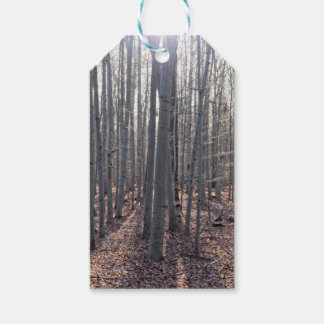 A beech forest in fall. pack of gift tags